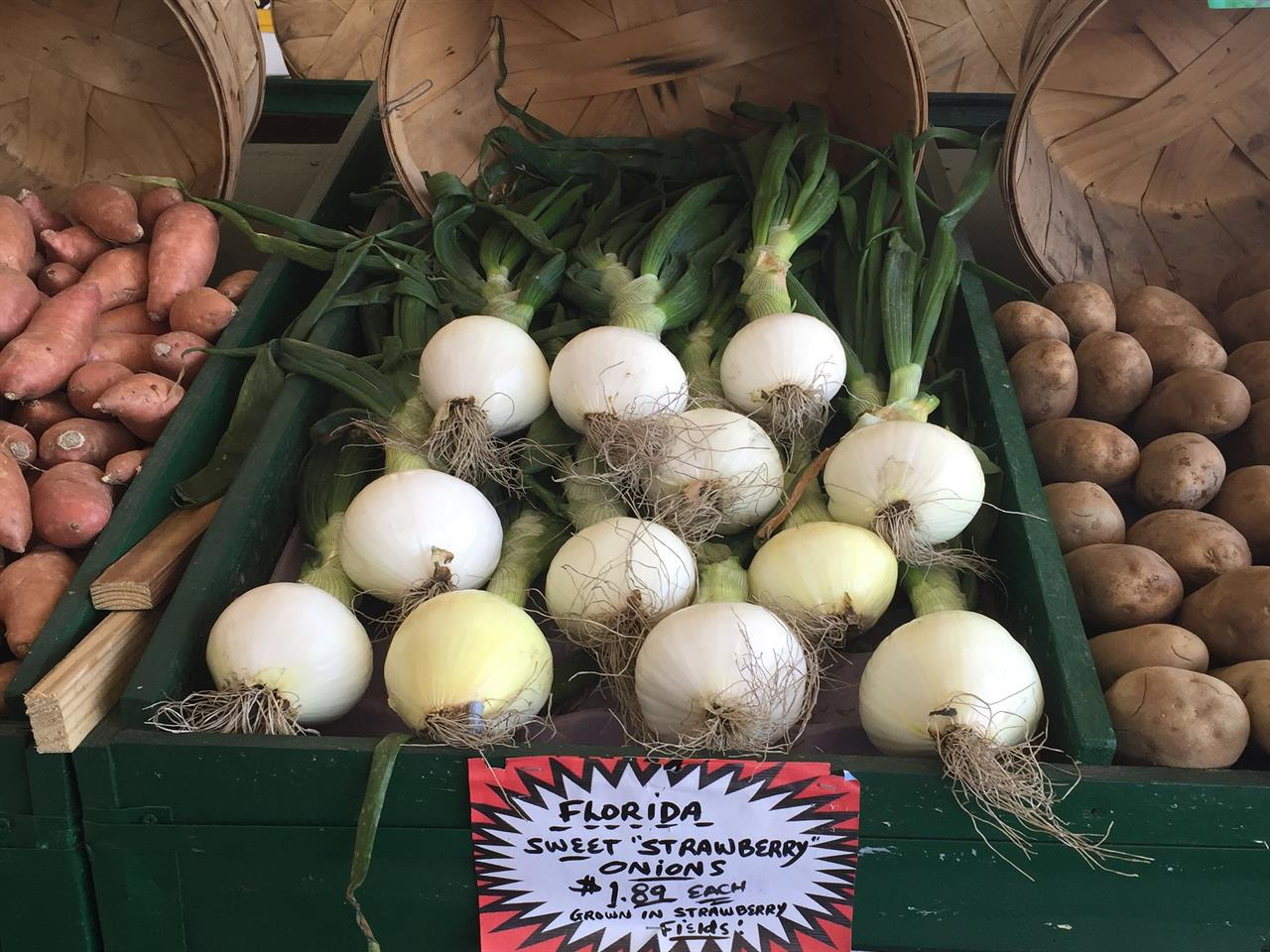 Plant City Sweet Top Onions