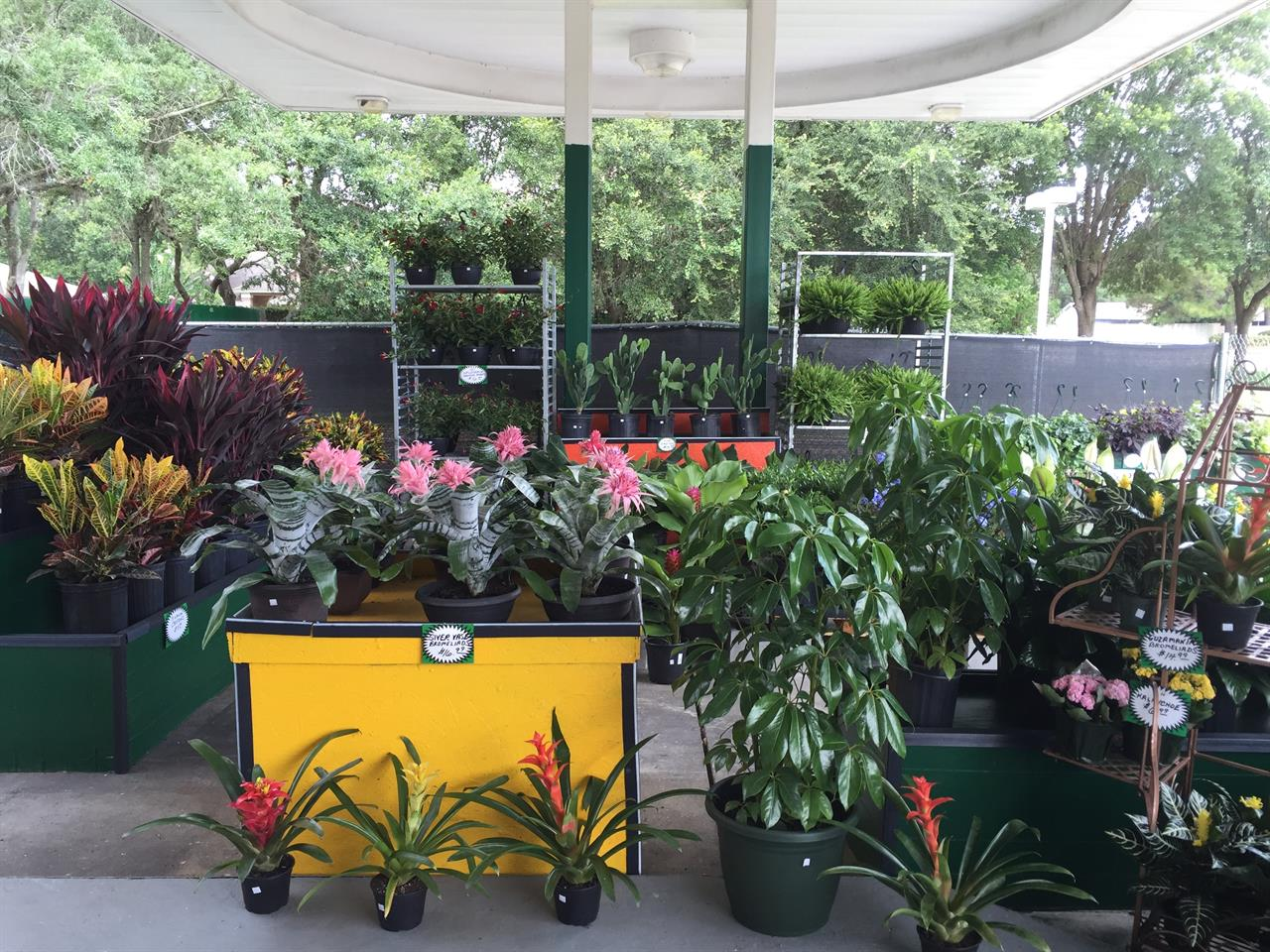 Huge Selection of Flowers & Plants