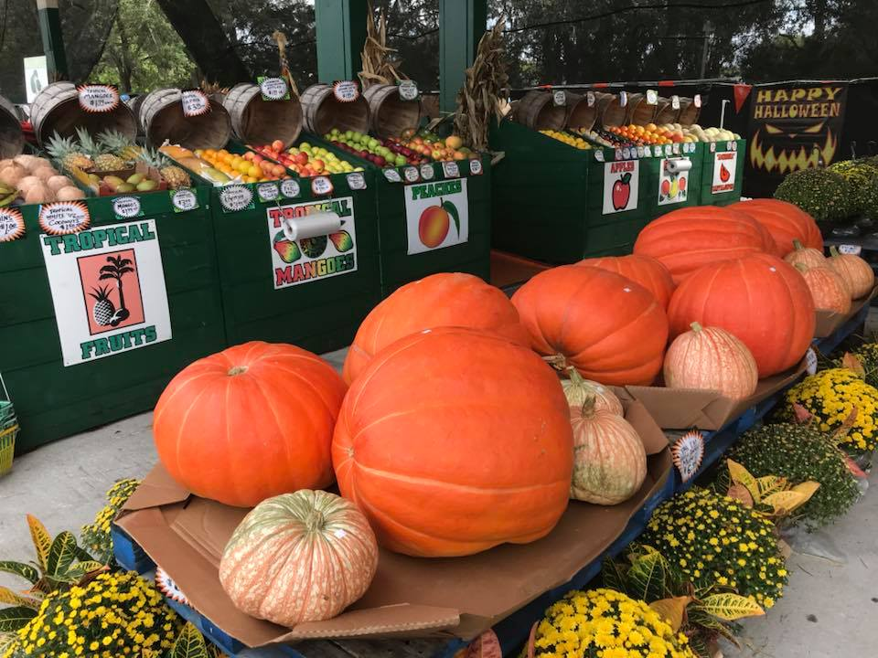 Prize Winner Pumpkins